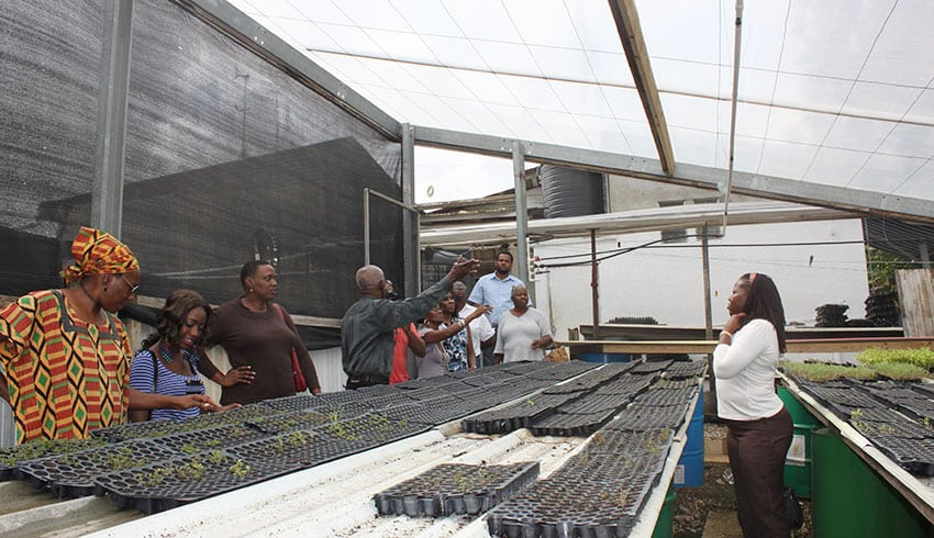 Enabling Caribbean women farmers' participation in the green economy